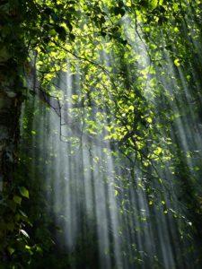 eltete-forest