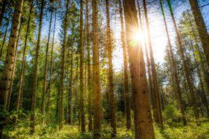 Slip Sheet as green technology